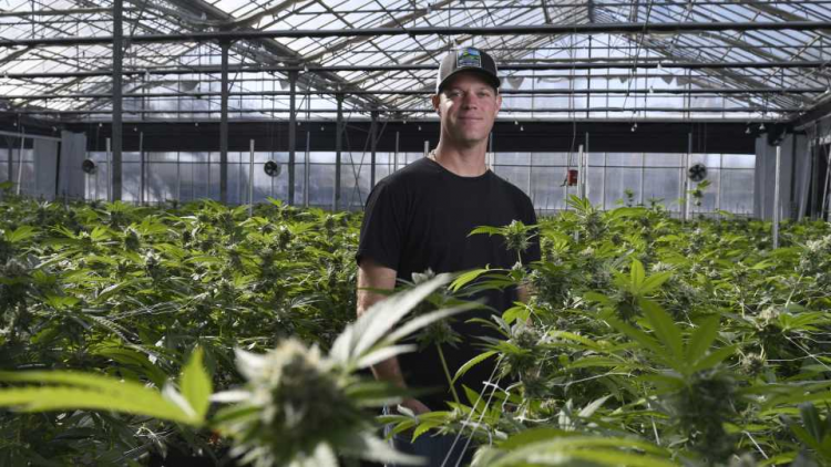 Cannabis farms and where to find weed