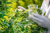 Buy cannabis Online Canada